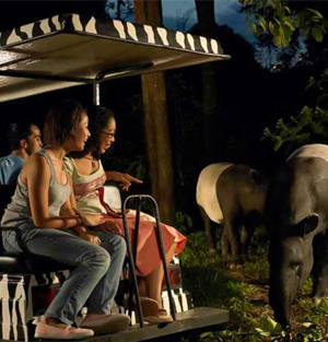 Singapore Night Safari Ticket