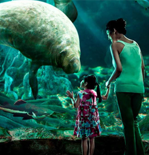 Singapore River Safari Ticket