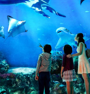 SEA Aquarium Singapore Ticket