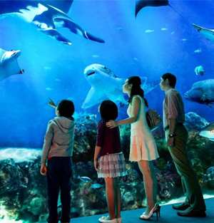 S.E.A. Aquarium Ticket Sentosa